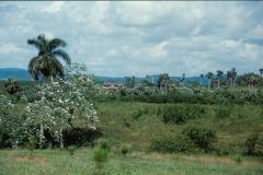 Botanical Garden - Pinar del Rio